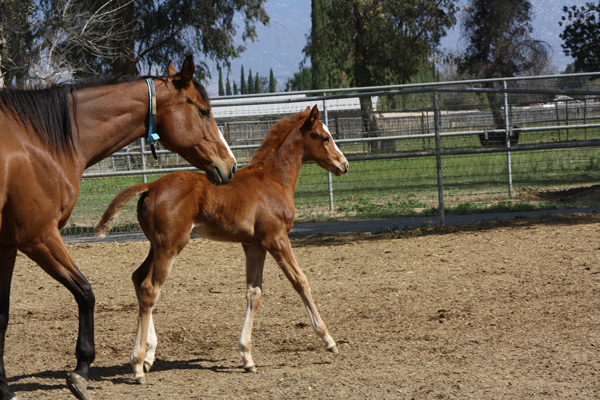 Unusual Heatwave Foal 10