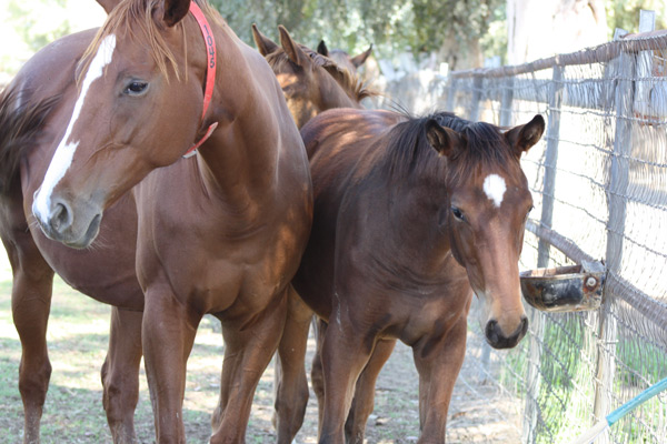 Unusual Heatwave Foal 5
